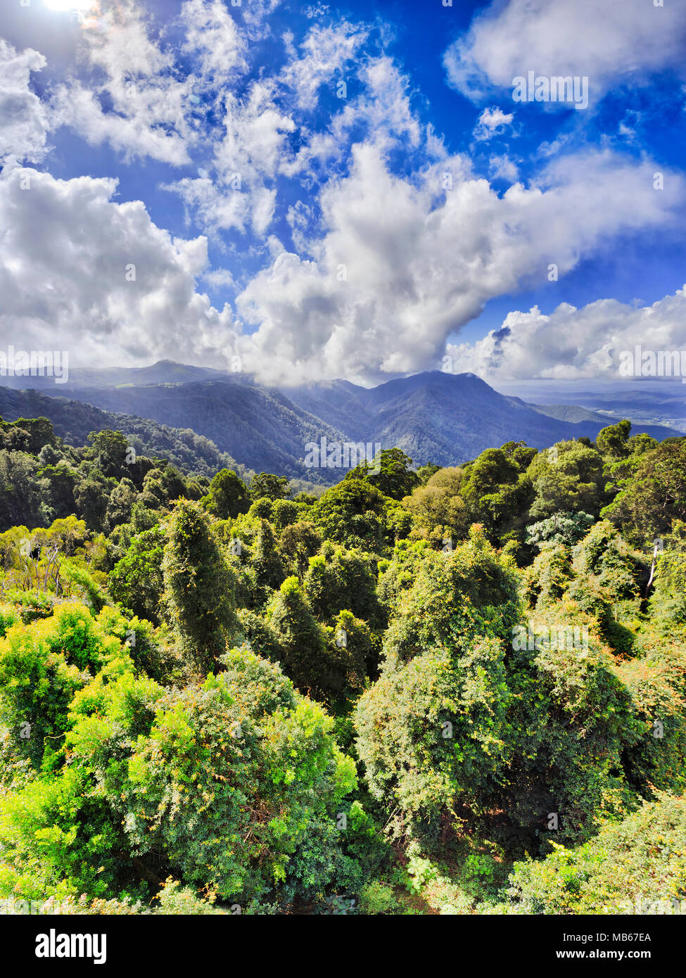 Dorrigo national park with ancient gondwana rainforest from main tourist lookout on a sunny day over canopy of evergreen gum-trees under blue sky. - Stock Image