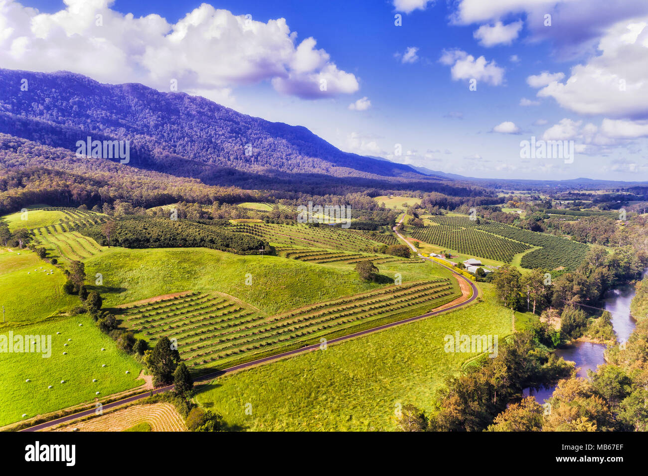 Agriculture farms with cultivated fields of fruit trees and nuts in remote green area of Bellinger near DOrrigo mountaisn of NSW on a summer sunny day - Stock Image