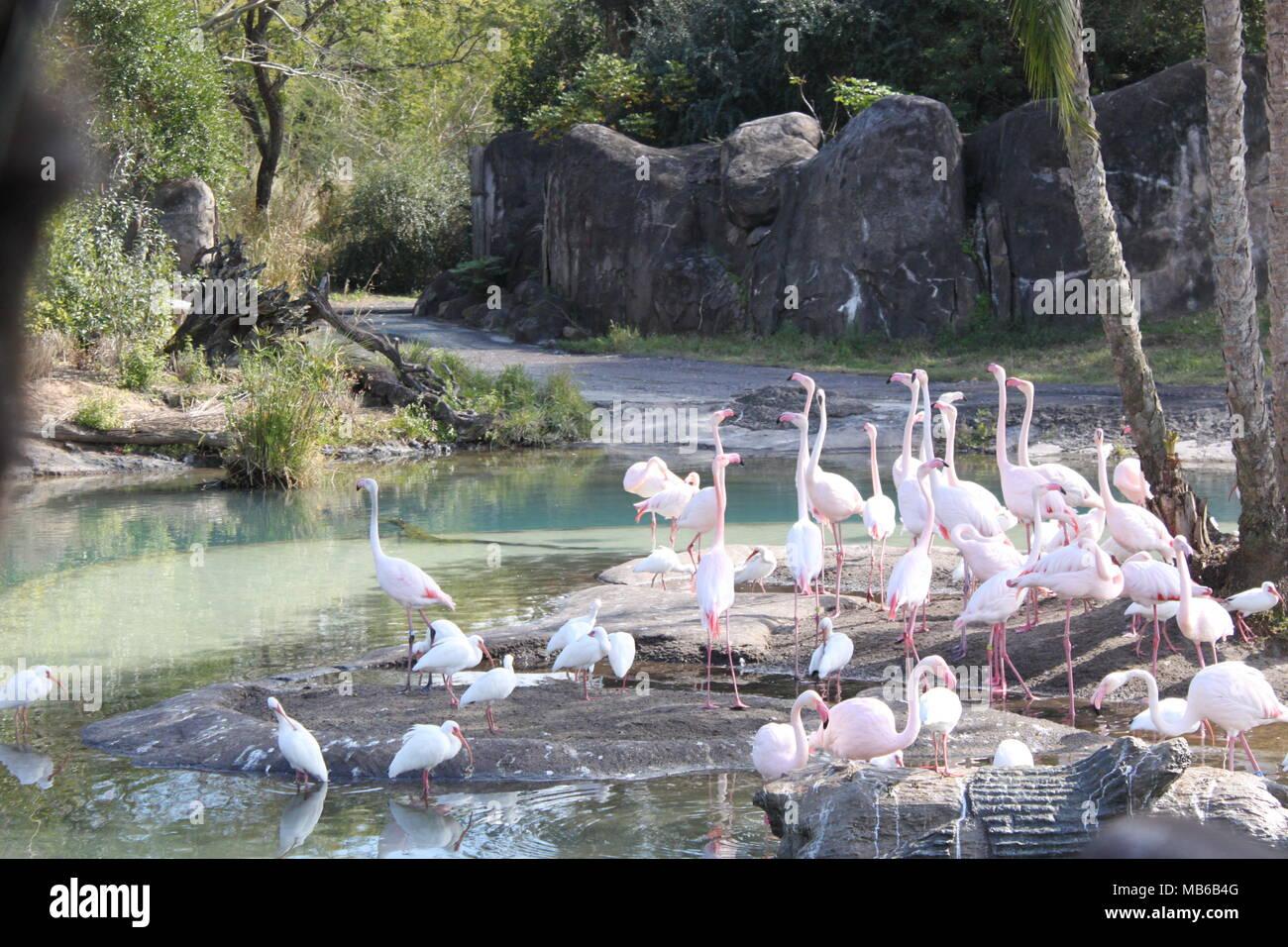 Flamingo Fest! - Stock Image