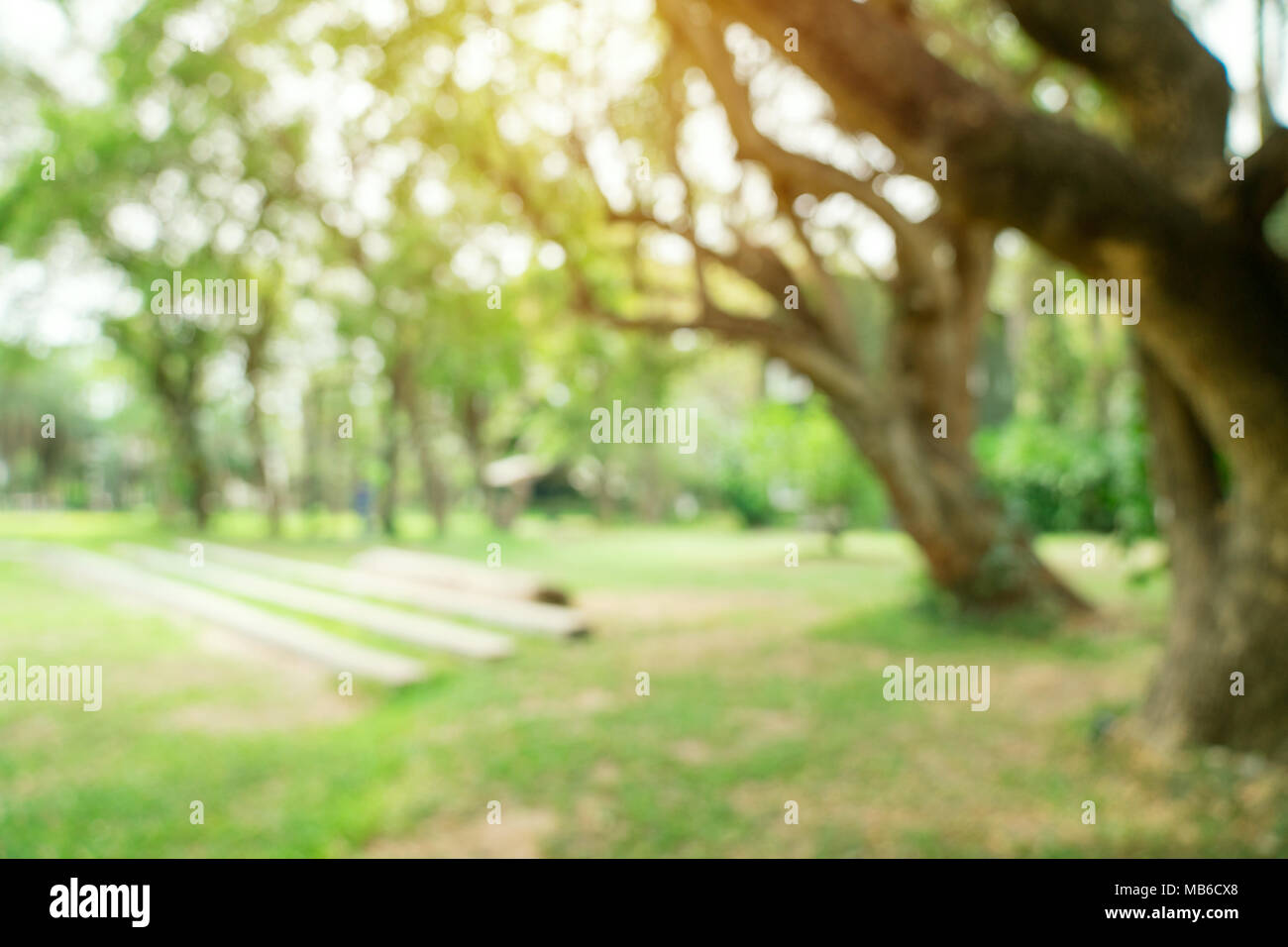 Sunlight Trees Background Blur Stock Photos Sunlight Trees