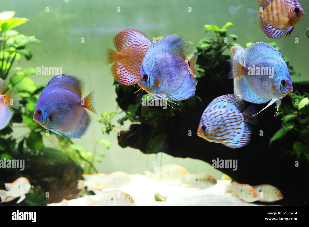Colorful Fish Aquarium Stock Photos & Colorful Fish Aquarium Stock ...