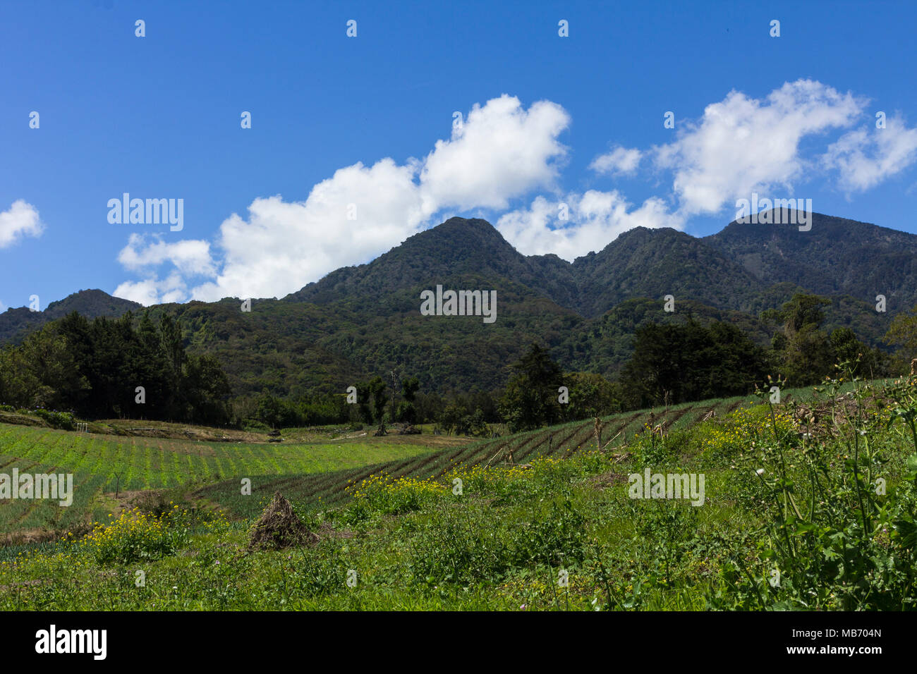 Panama's highest volcano, Volcan Baru, near Boquete, Panama on a clear day - Stock Image