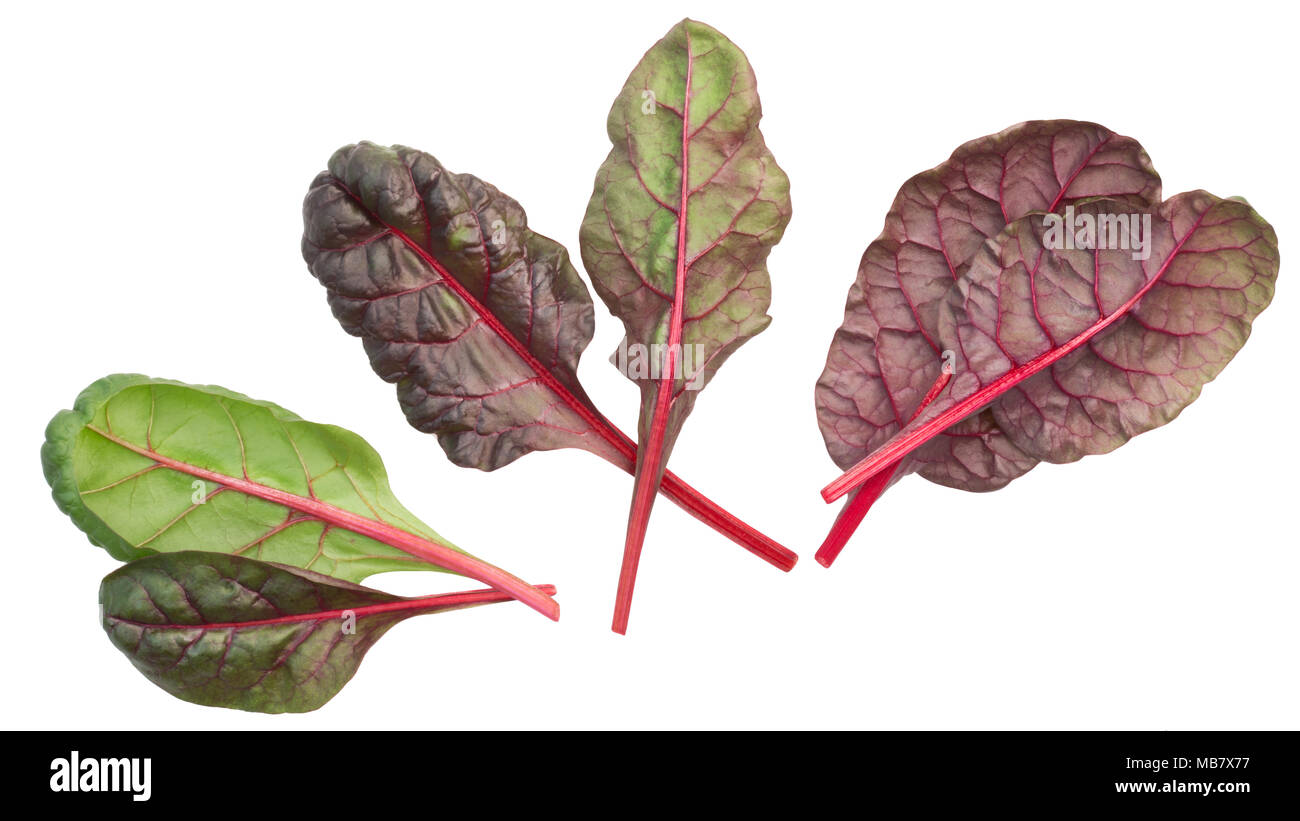 Swiss chard, silverbeet or mangold leaves (Beta vulgaris subsp. Cicla-group), top view - Stock Image