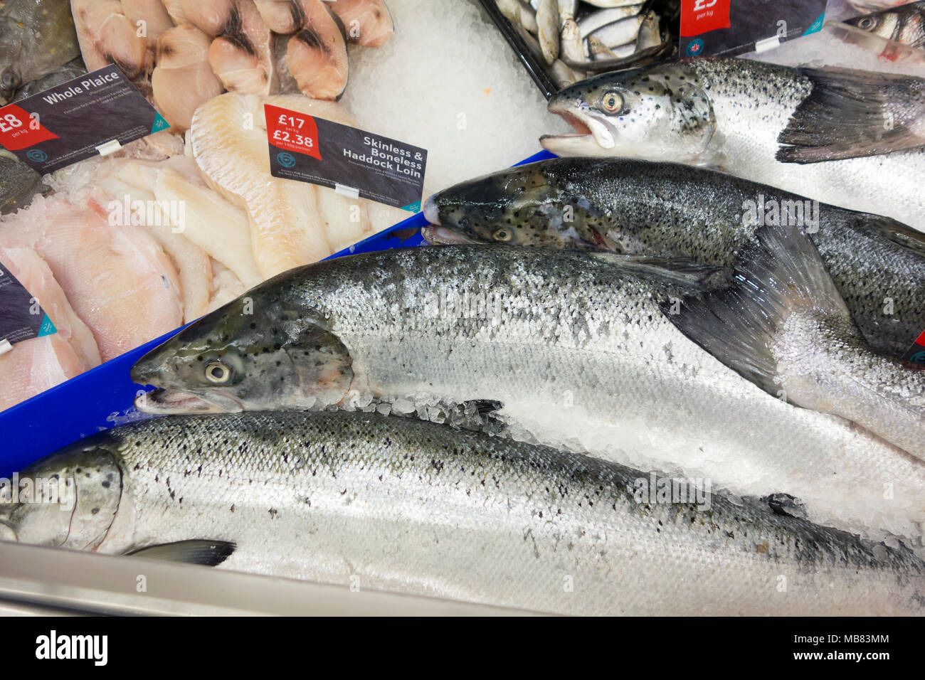 Fresh wet fish on fish counter - Stock Image