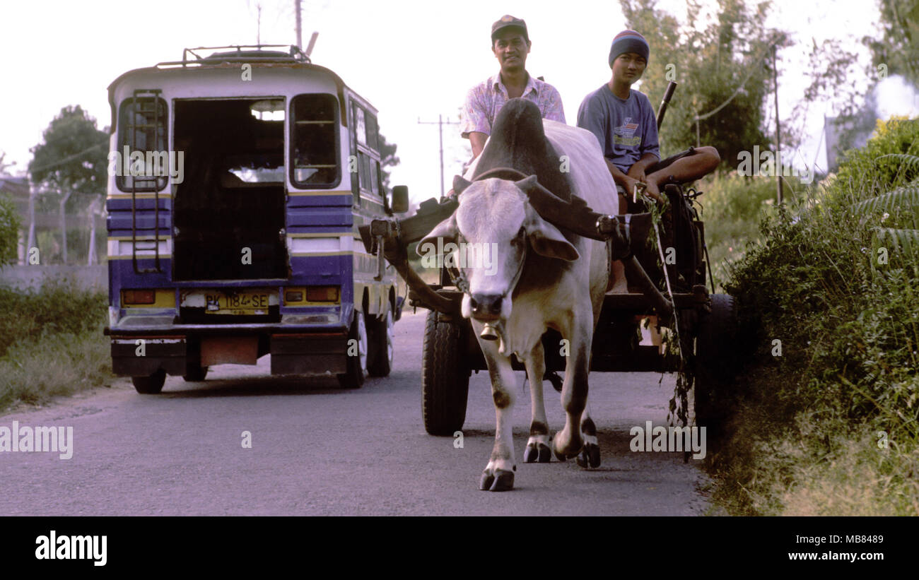 Karo Batak men riding their ox cart are passed on the road by a bus signalling the erosion of indigenous culture in Sumatra, Indonesia. - Stock Image