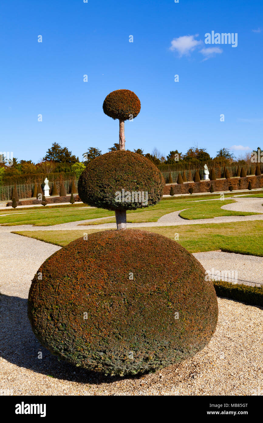 Chateau de Versailles (Palace of Versailles), a UNESCO World Heritage Site, France - detail of a well manicured bush in the park - Stock Image