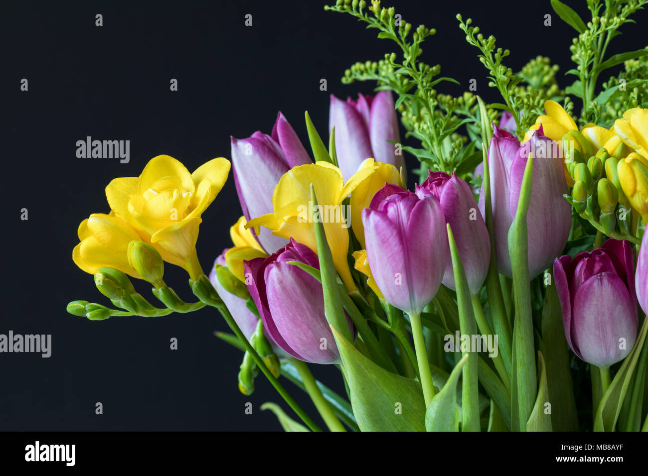 Close up of a spring bouquet of yellow freesias and pink tulips against a black background - Stock Image