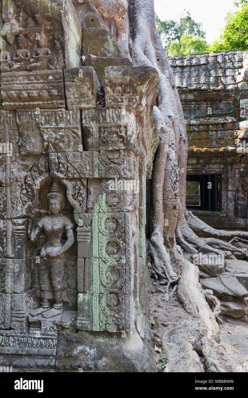 Tree roots and carvings,Ta Prohm 12th century ruined buddhist temple, Angkor site, Siem Reap Province, Cambodia Asia (see also image MB*BXD) - Stock Image