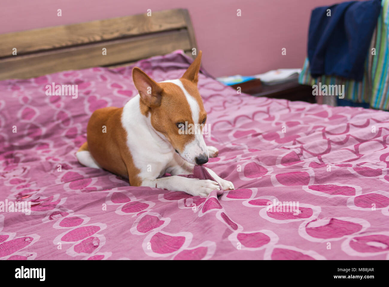Everything About The Dog Stock Photos & Everything About The
