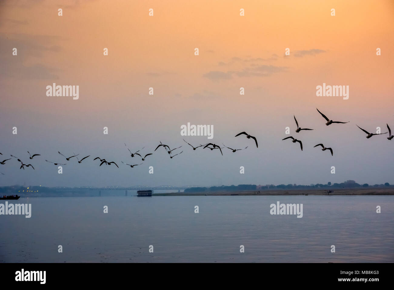 A flock of birds flies over the Ganges River at sunset at Varanesi, Uttar Pradesh, India - Stock Image