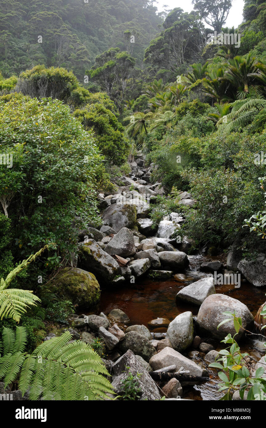 Native bush in the Oparara Basin region on the West Coast of New Zealands South Island Stock Photo