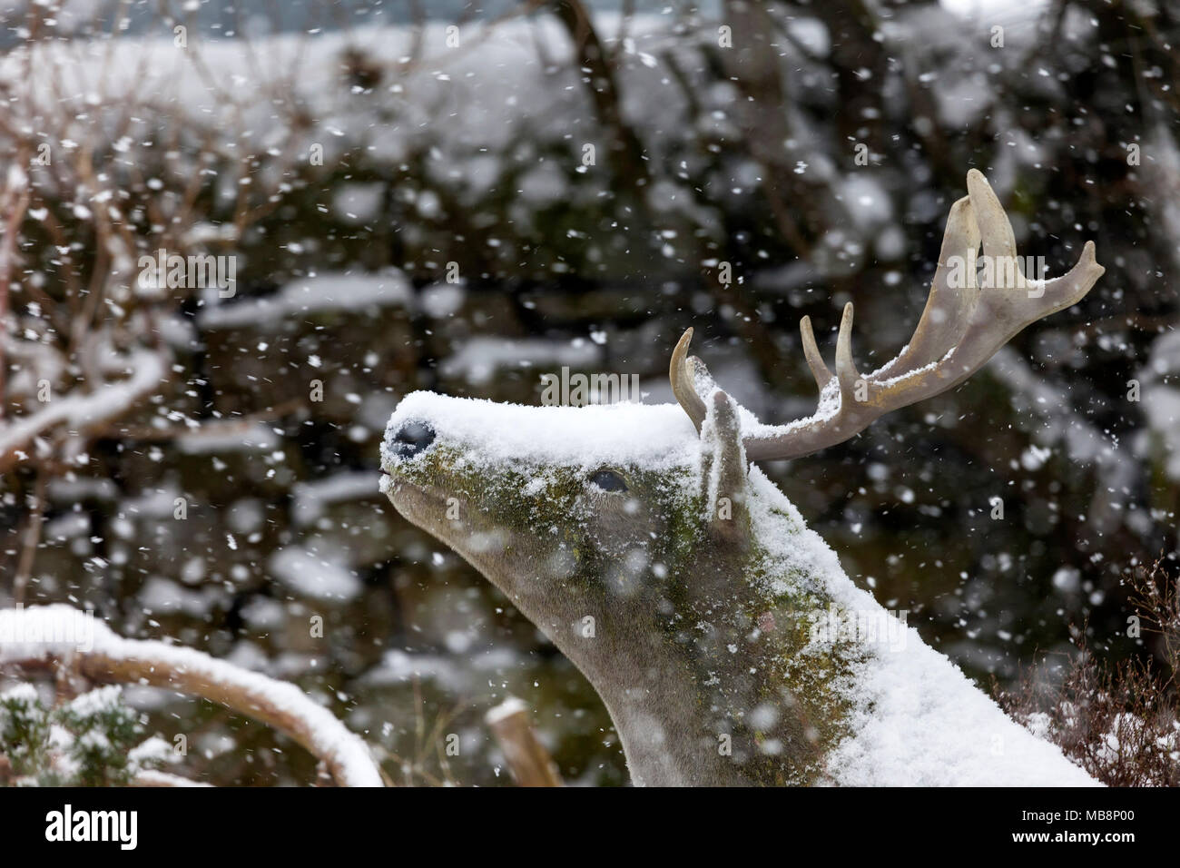 Realistic Ornamental Red Deer and Falling Snow, England, UK. - Stock Image