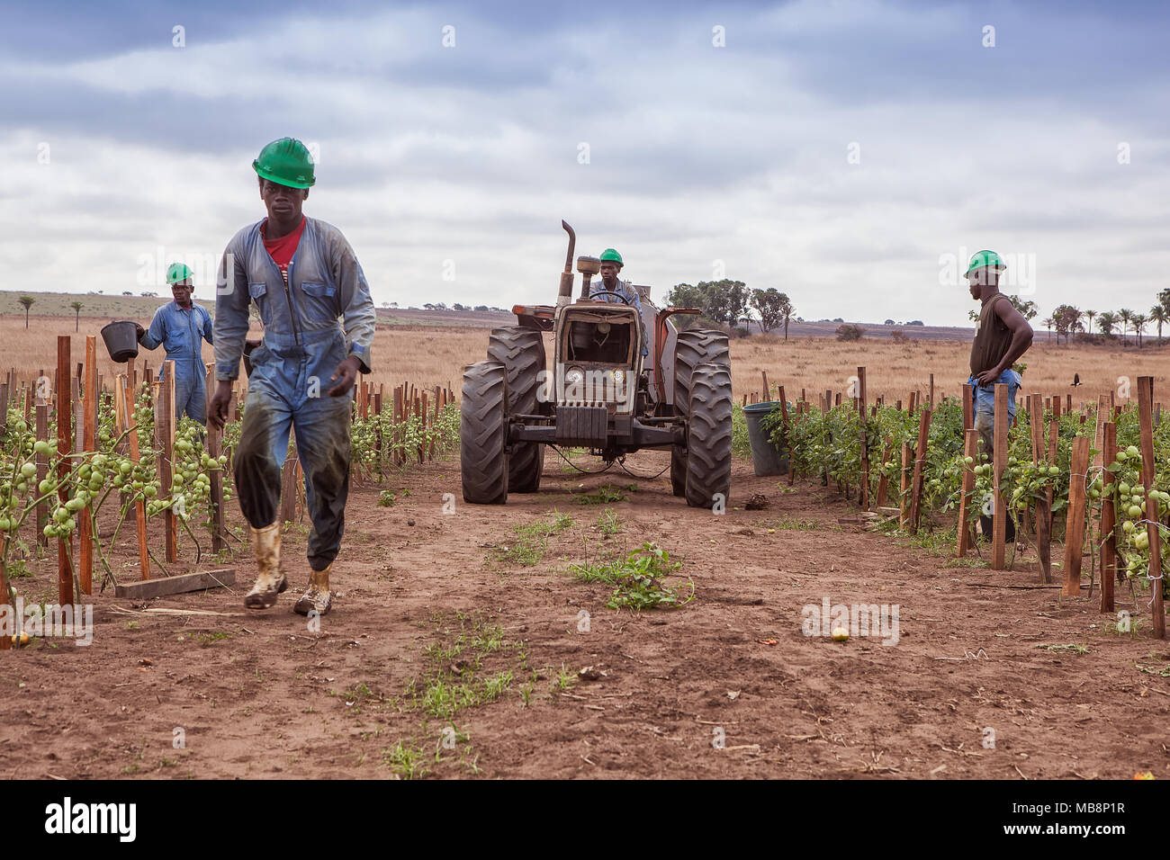 CABINDA/ANGOLA - 09JUN2010 - Team of African farmers walking between planting with tractor. - Stock Image