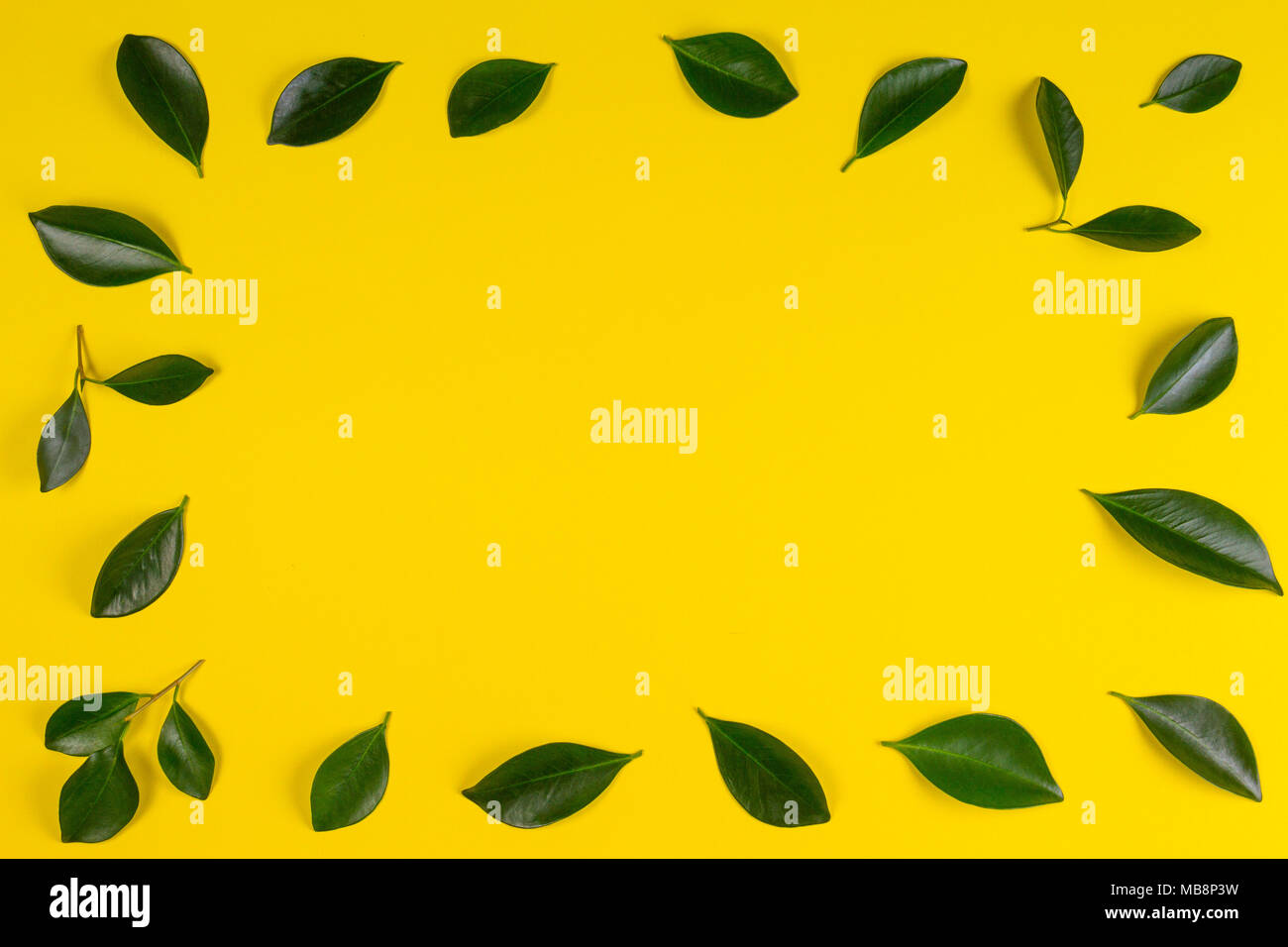 Green tree leaves frame with yellow background - Stock Image