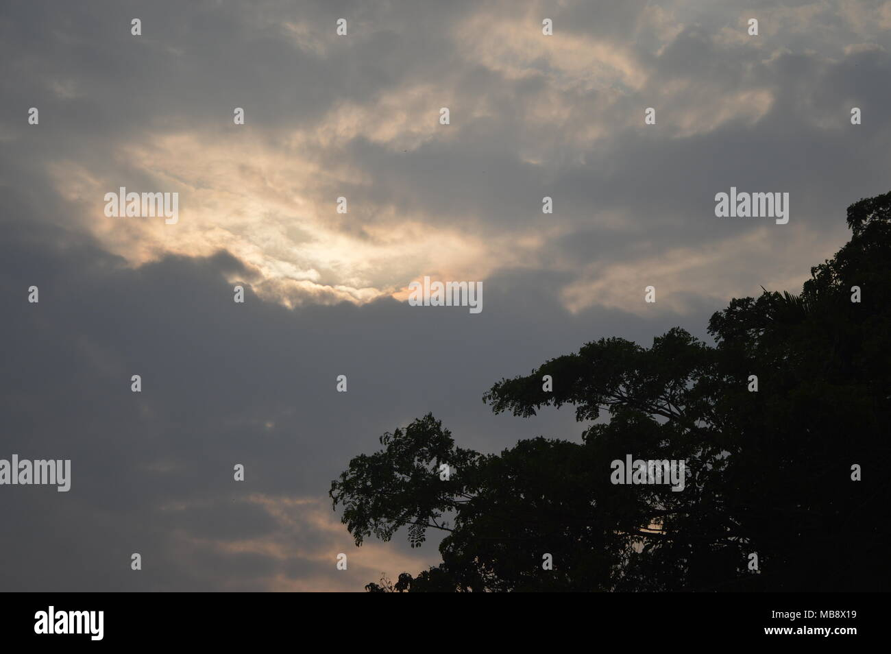 photograph of sky at evening time . frame given by a tree ...