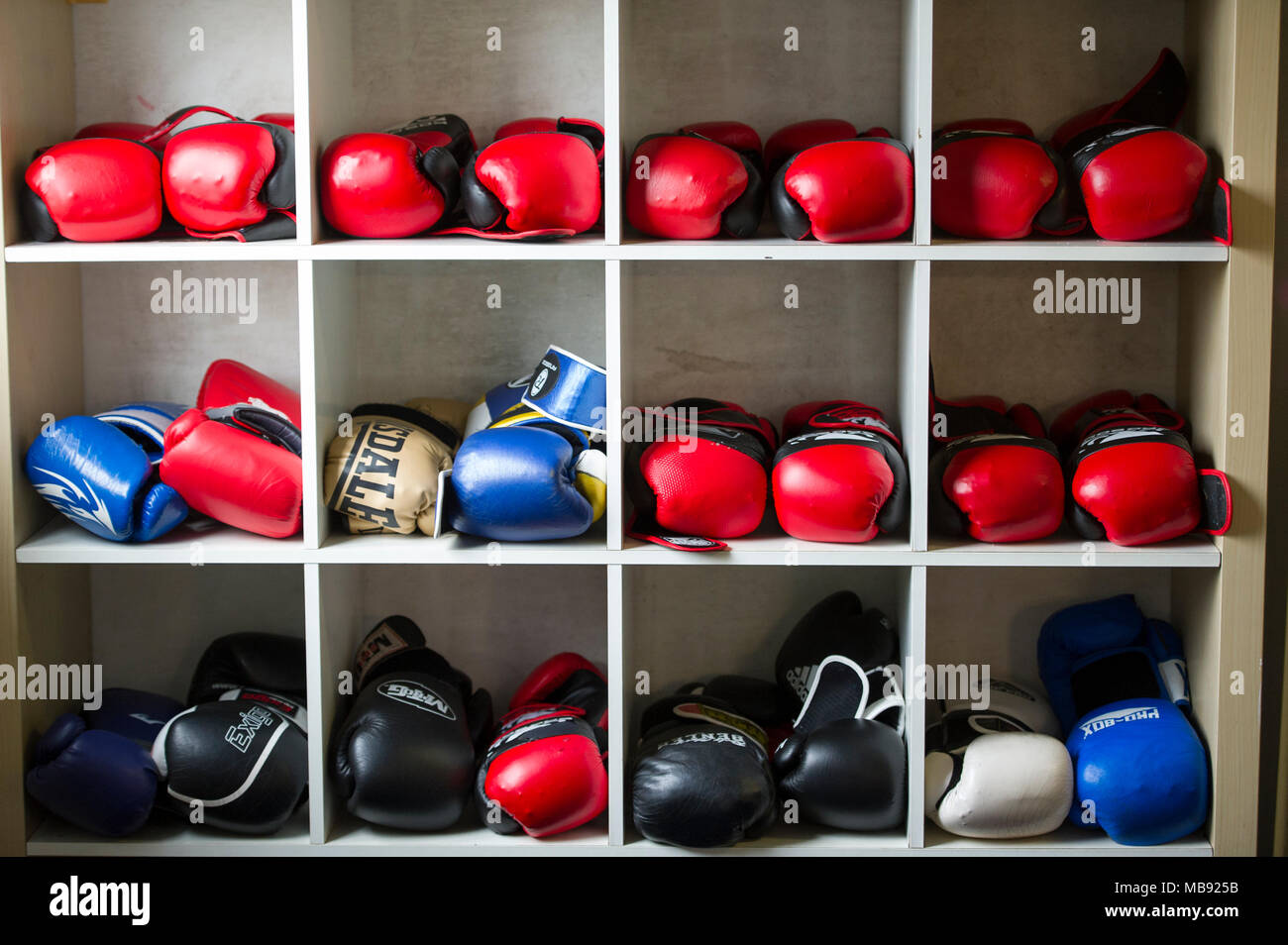 Various colourful boxing gloves stored on shelves in a boxing gymnasium. - Stock Image