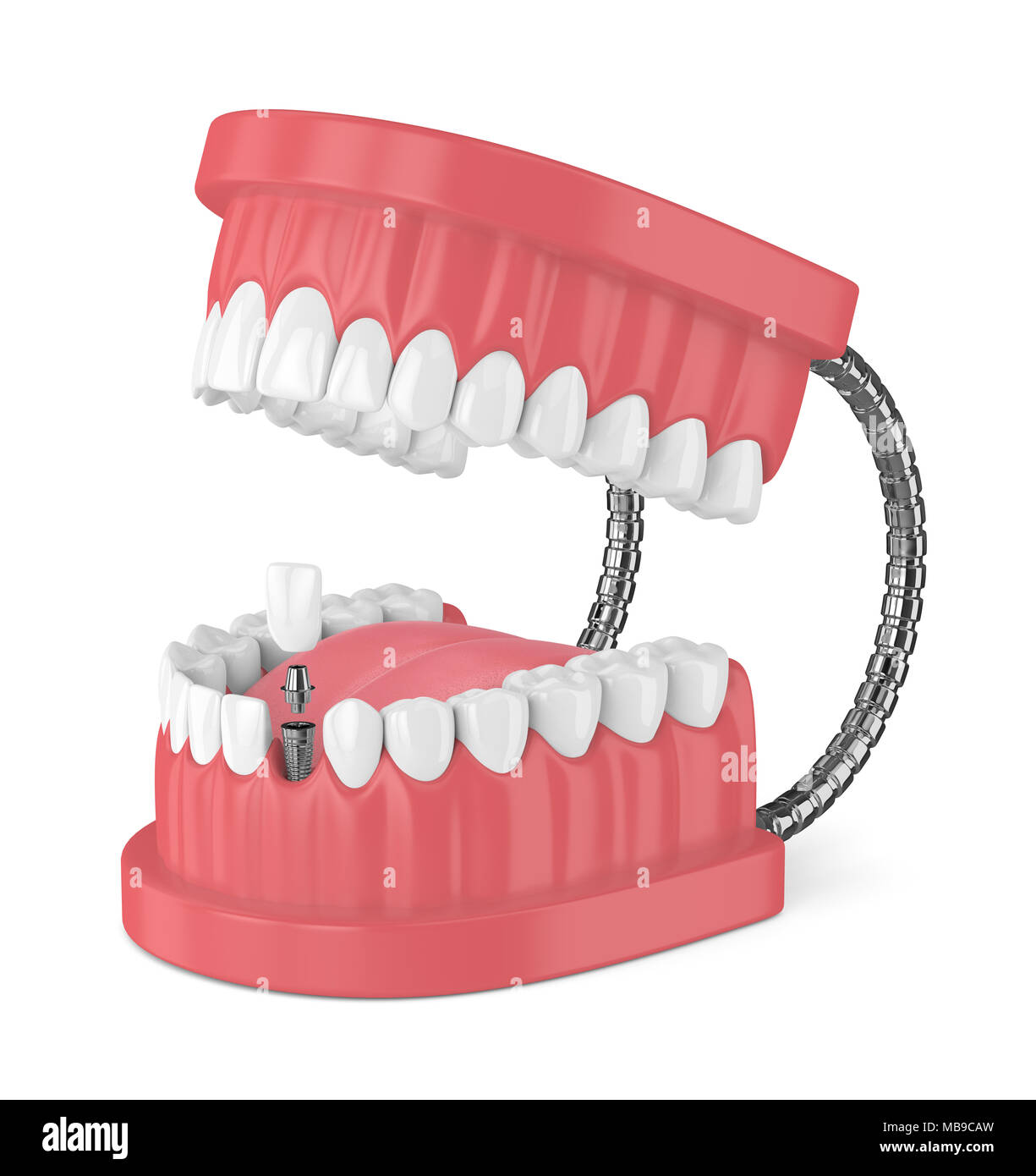 Incisor Teeth Stock Photos & Incisor Teeth Stock Images - Alamy