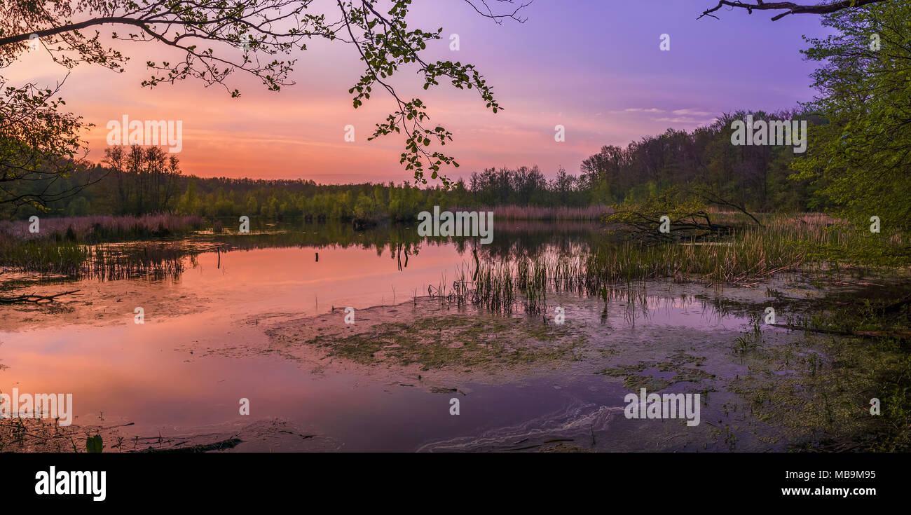 An iridescent sunset illuminating the stunning Herrensee. Plus, of course, pond scum for added awe. - Stock Image