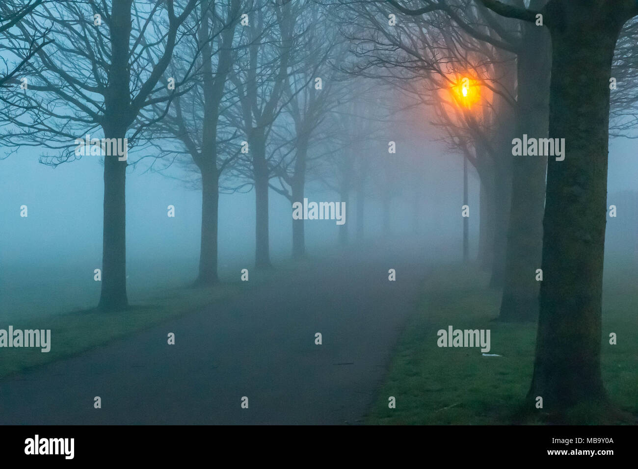 Warrington, Cheshire, UK. 9th April, 2018. A lamp lit, tree-lined road in Victoria Park, Warrington, Cheshire, England, UK early on a foggy Monday morning 9th April 2018 Credit: John Hopkins/Alamy Live News Stock Photo