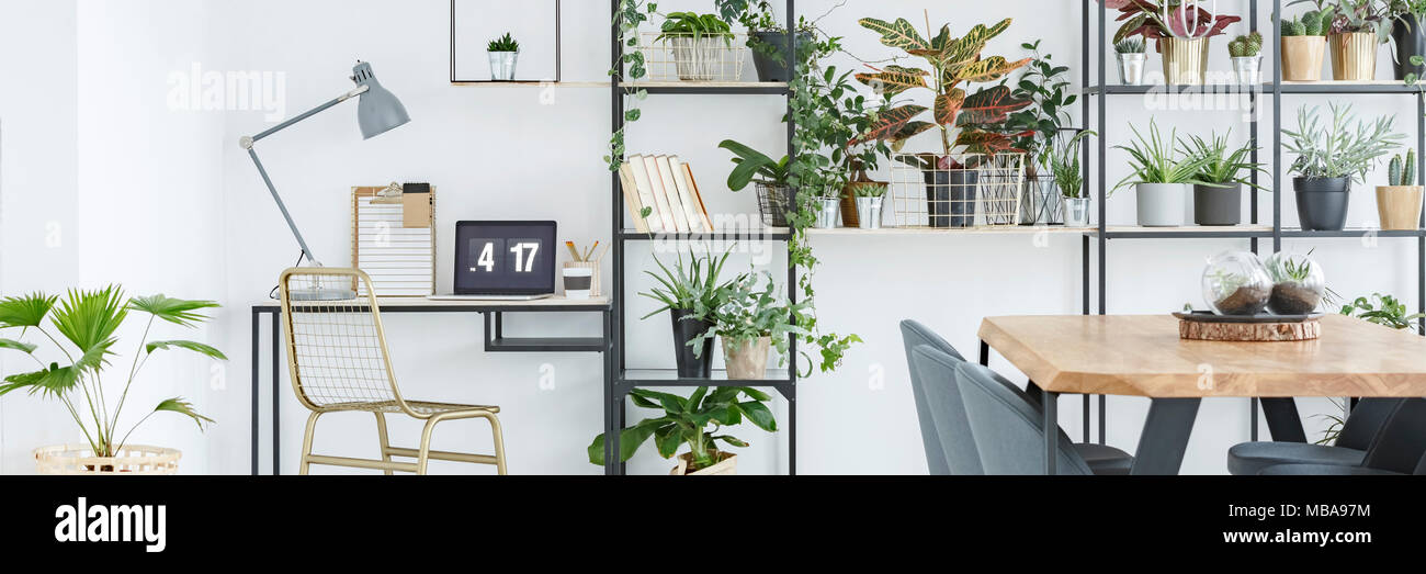 Desk with lamp, laptop and gold chair in home office corner in white room interior with plants - Stock Image