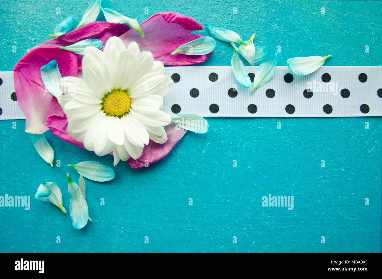 Wooden turquoise surface with chamomile, colorful flower petals and white spotted ribbon. Beautiful template for your design. - Stock Image