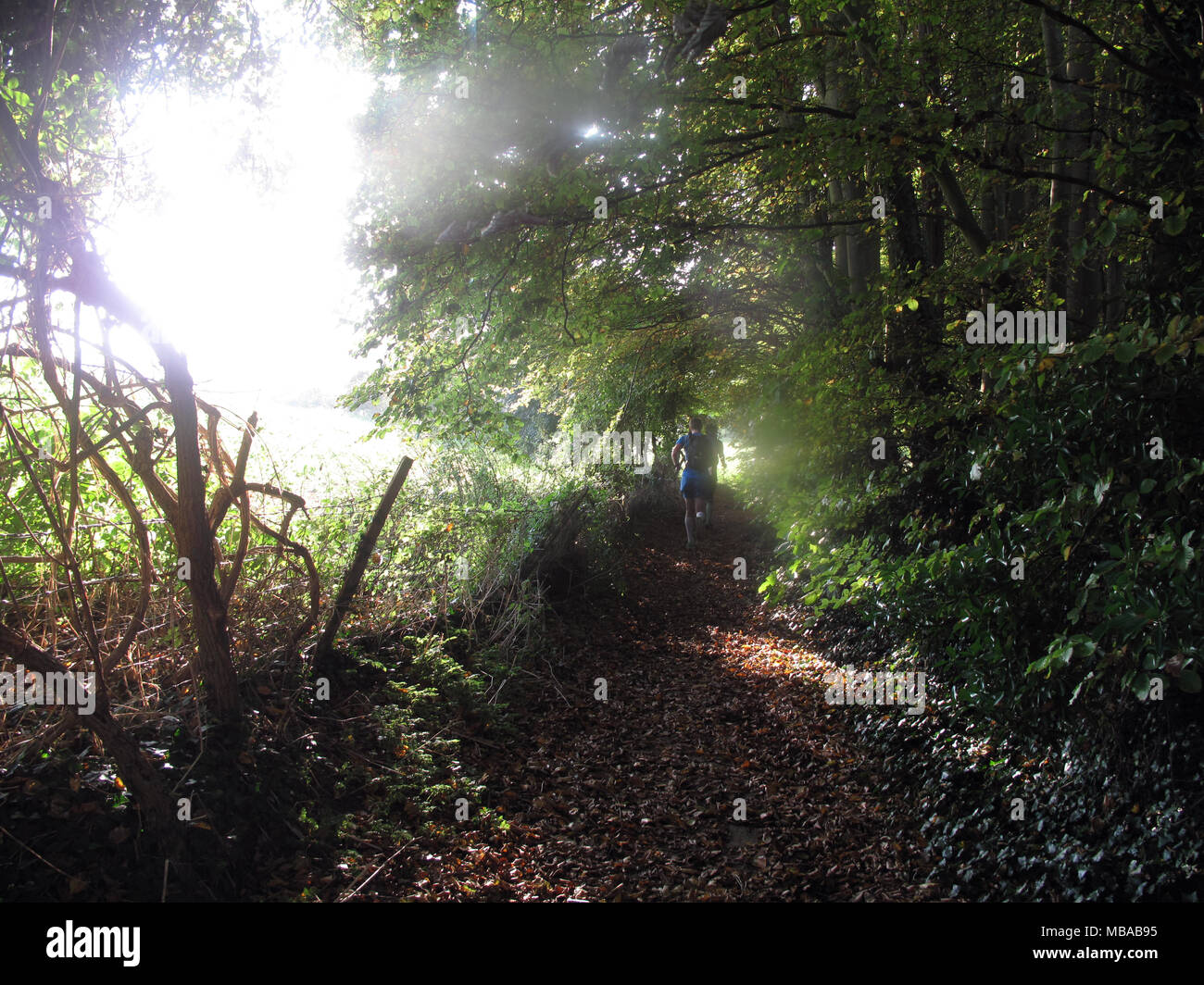 Two runners on the South Downs path jog up a leafy tree lined path on a sunny Autumn early morning. Stock Photo