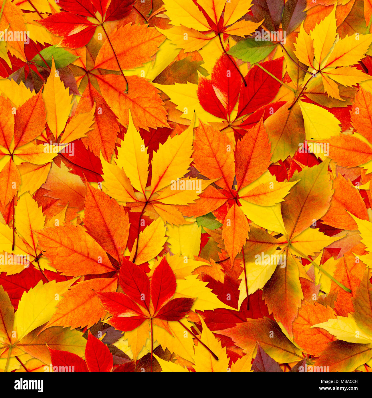 Fall Leaves Seamless Background High Resolution Stock Photography ...