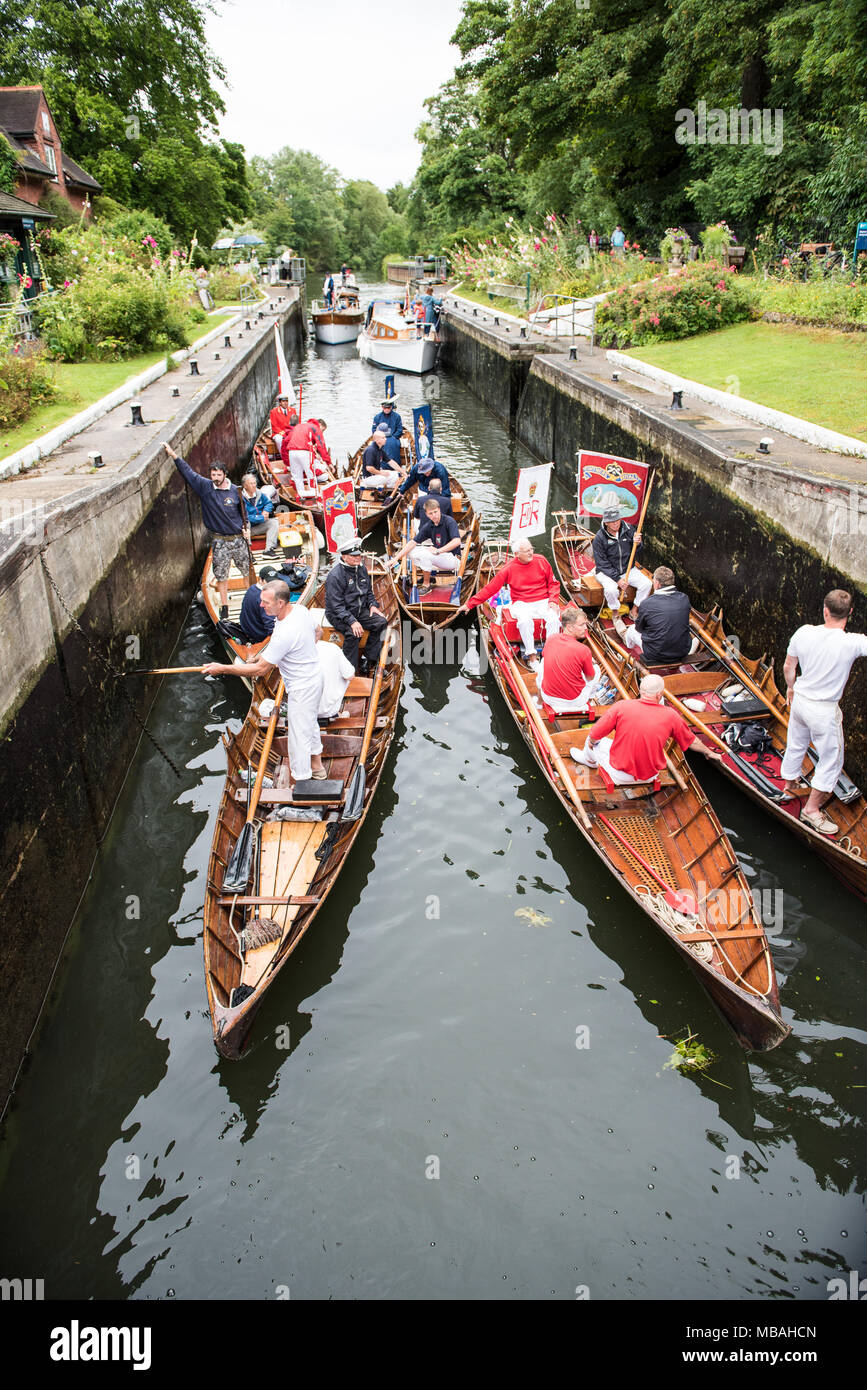 Swan Upping on the River Thames - Stock Image