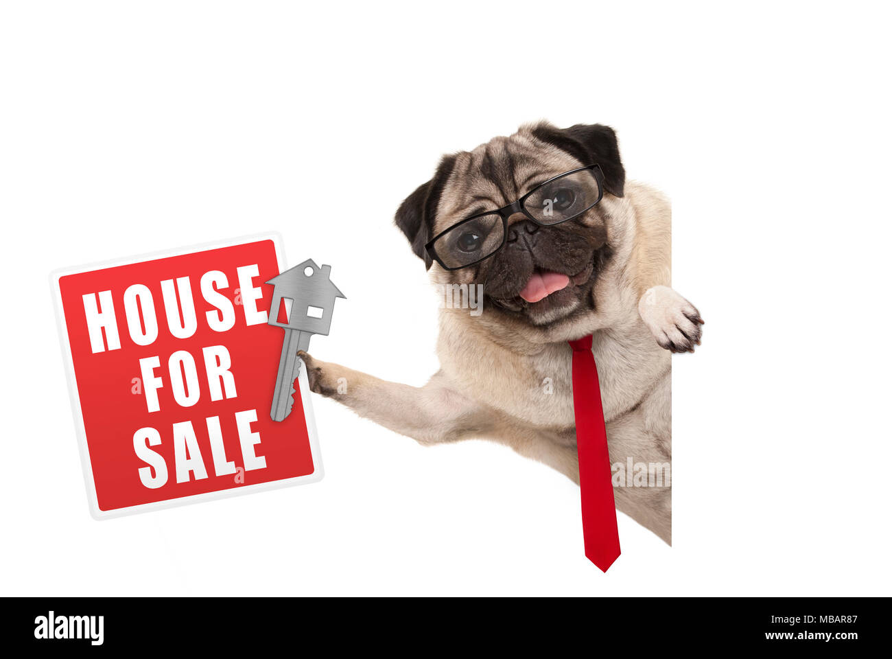 happy business pug dog witg glasses and tie, holding up red house for sale sign and key, isolated on white background Stock Photo