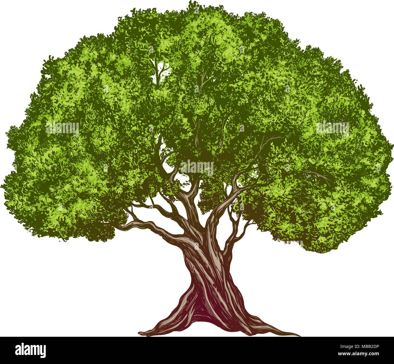 Olive tree hand drawn vector illustration realistic sketch for Albero ulivo vettoriale
