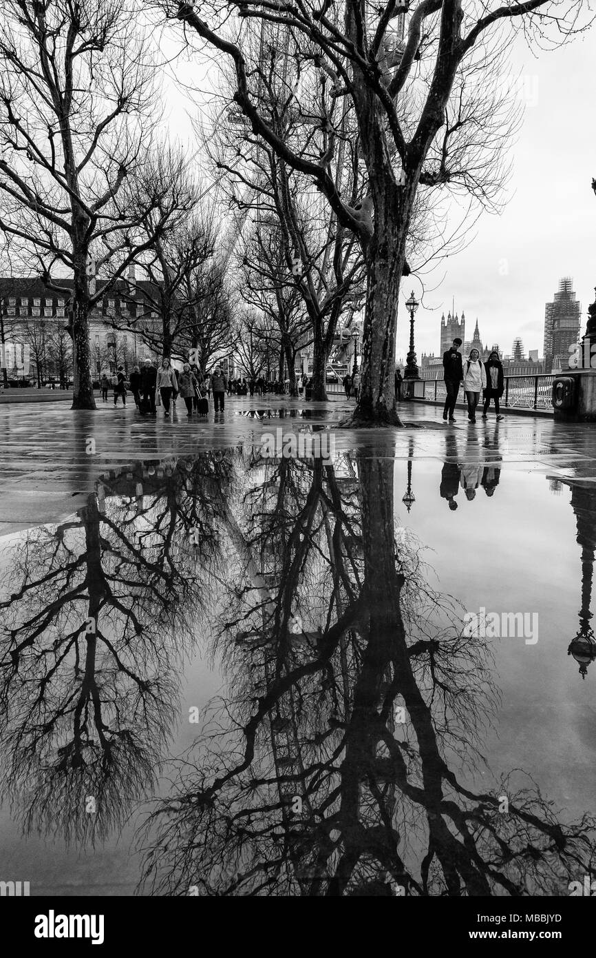 Black and white, monochrome, imageThe London Eye and trees on the South bank of the River Thames in London, England, reflected in pools of rain water. - Stock Image