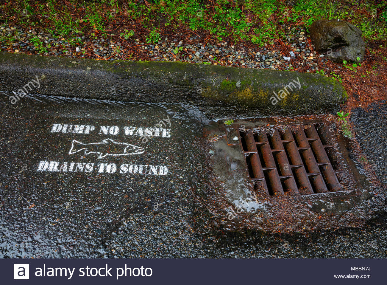 Runoff from a rainstorm flows past a water-quality warning sign and into a stormwater drain in Shoreline, Washington. The painted sign features a salm - Stock Image