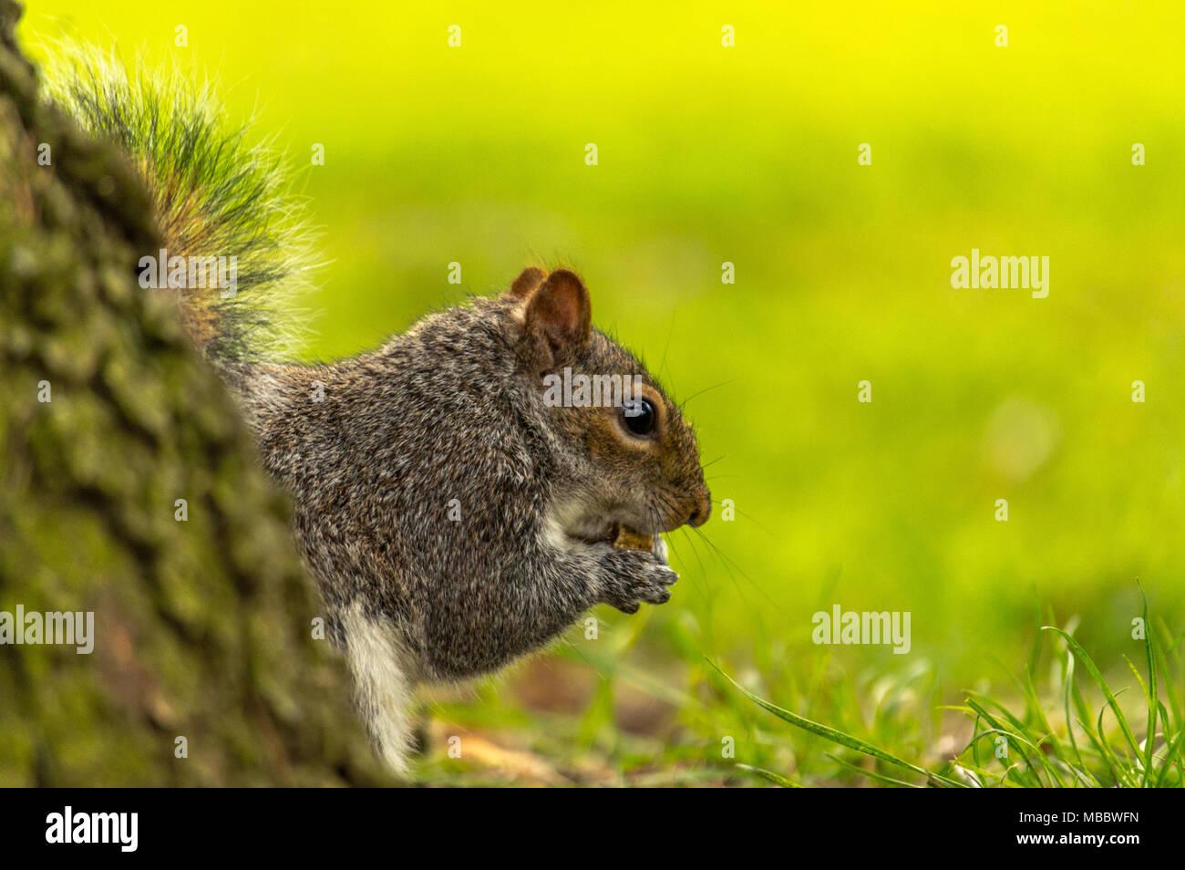 Abington park, Wildlife Stock Photo