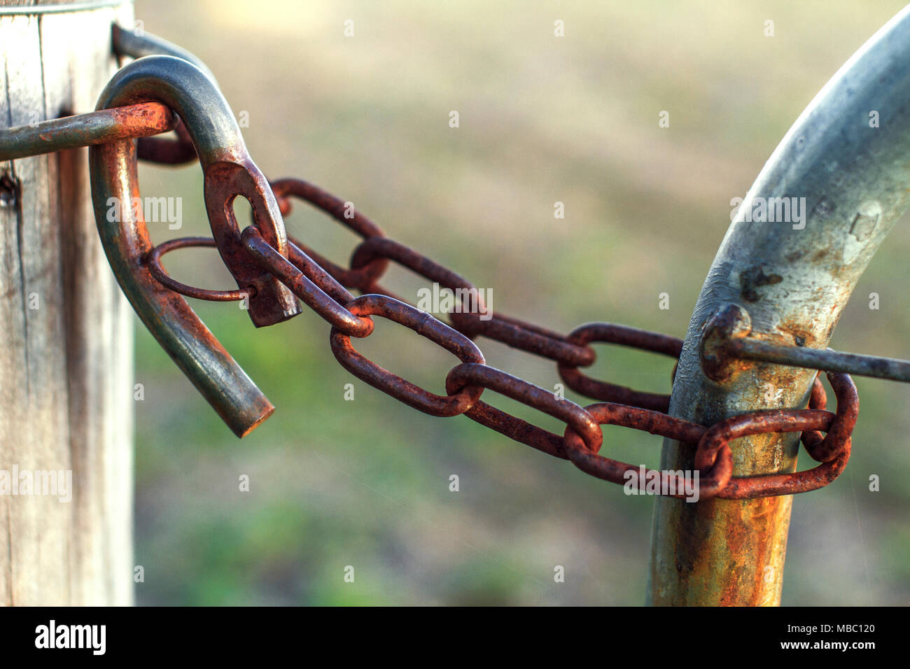 A rusty cattle lock fence at the cattle farm Stock Photo: 179129160 ...