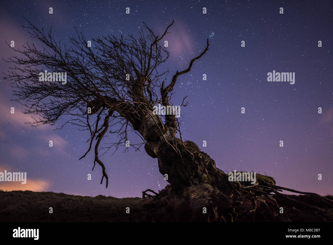 An old tree lying at a strange angle under the stars in the Campsie Fells near Glasgow - Stock Image