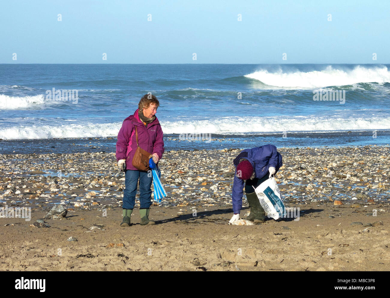two elderley women collecting waste plastic of the  beach in porthtowan, cornwall, england, britain, uk. - Stock Image