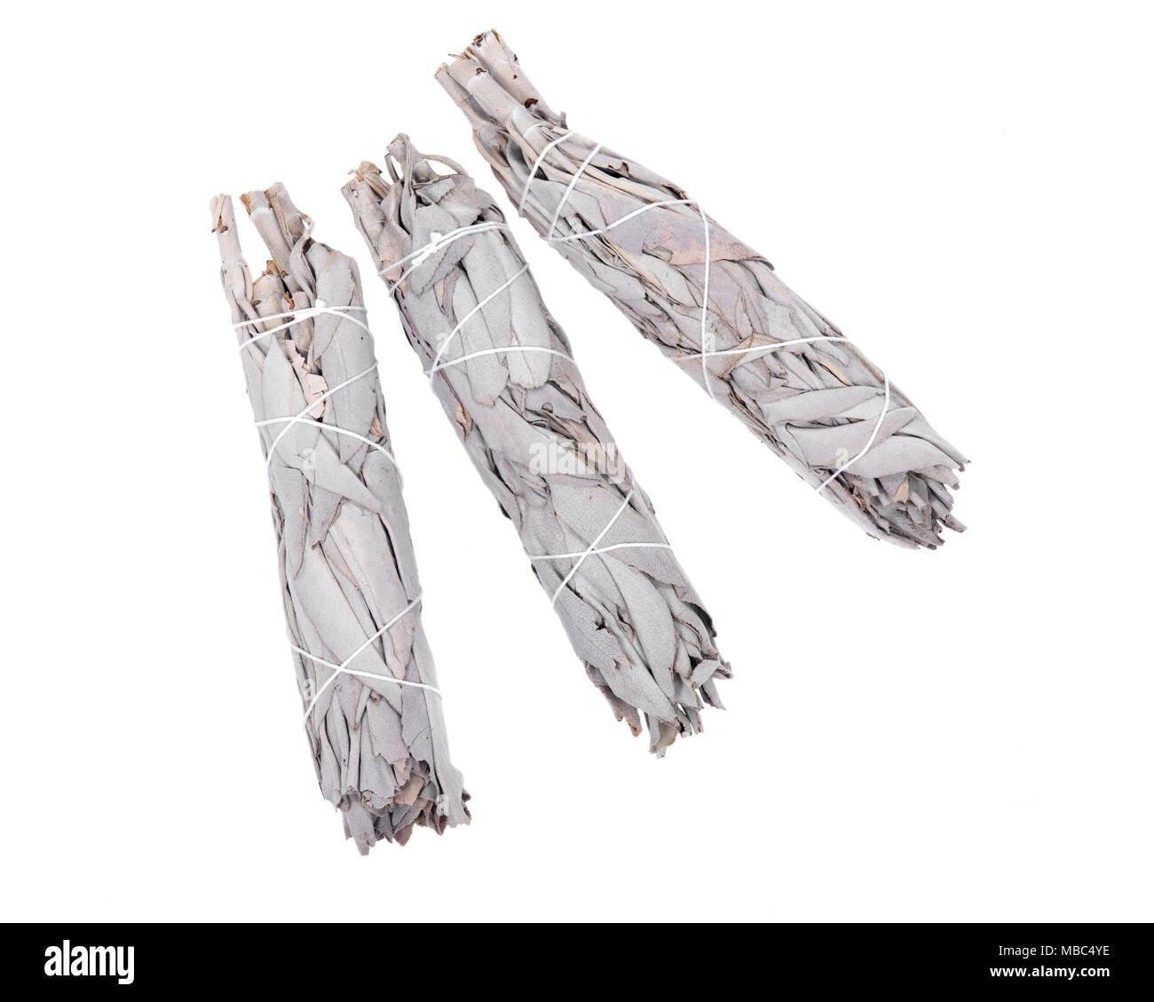 Sage smudge stick isolated on white background - Stock Image