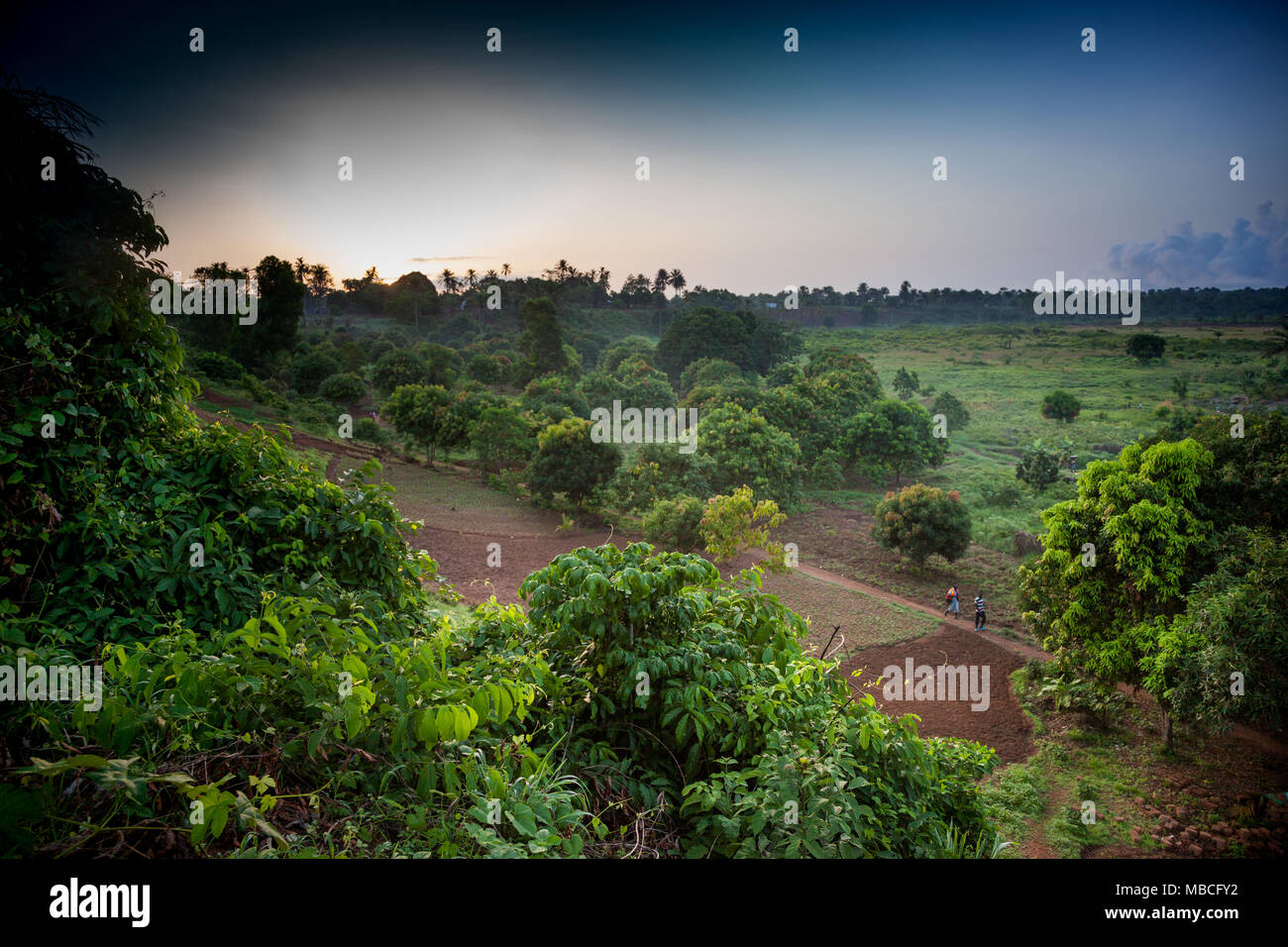 YONGORO, SIERRA LEONE - June 0, 2013: West Africa, two unknown people walking in the forest near the town of Yongoro - Stock Image