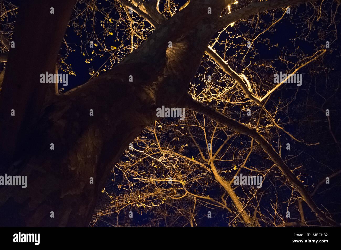 Tree Night Dark Light - Stock Image