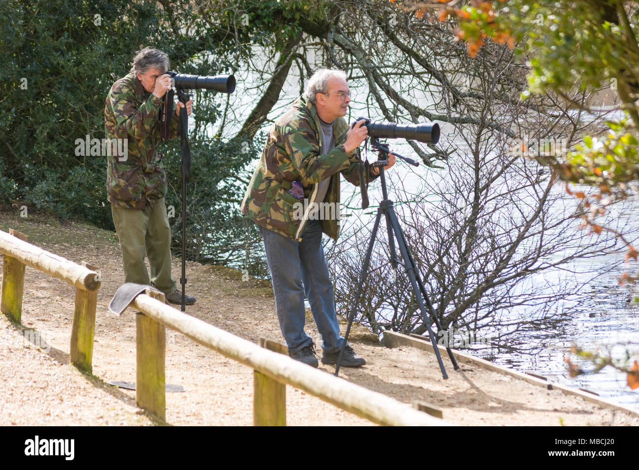 Birdwatchers with cameras and long lenses on tripods waiting patiently to take bird photographs next to Eyeworth Pond, Fritham, New Forest, Hampshire - Stock Image