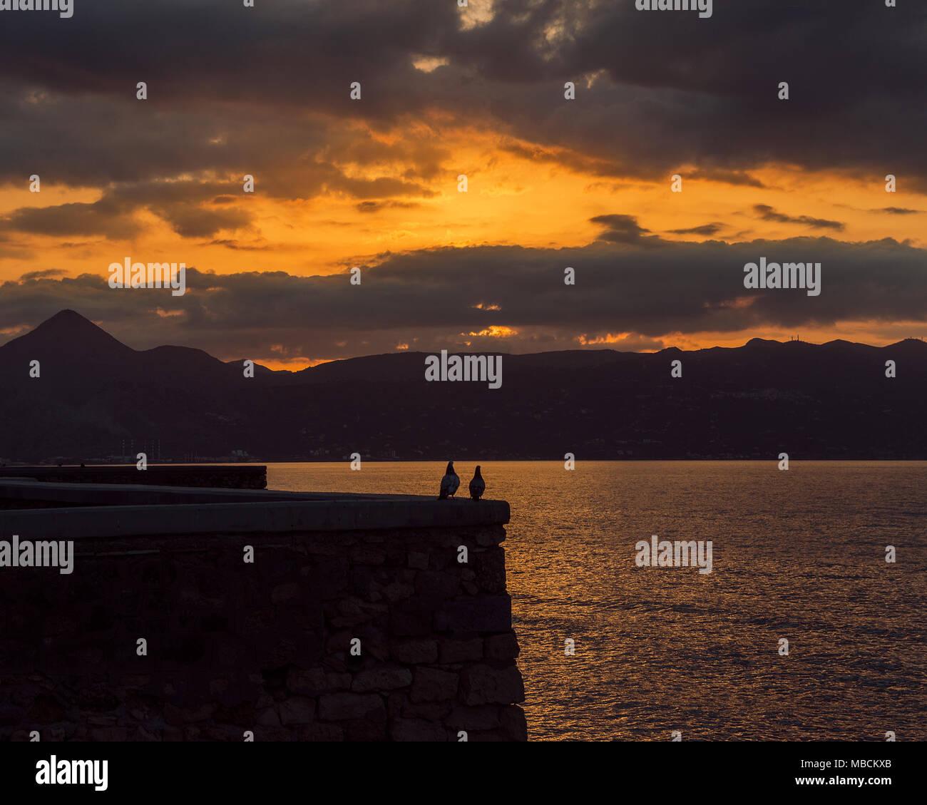 Pigeons at sunset - Stock Image