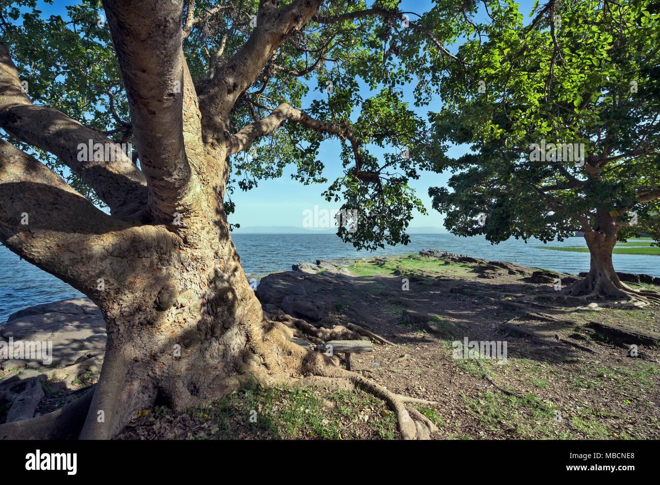 lake Awasa environment - Stock Image