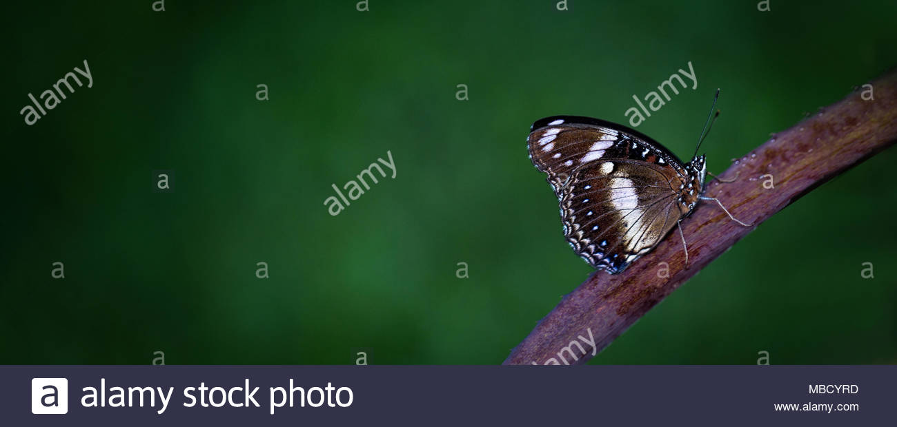 Beautiful Simple Imagery Of A Butterfly On A Branch - Stock Image