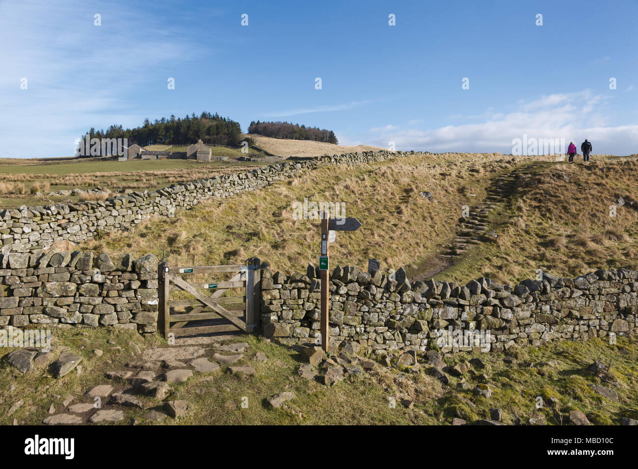 Hadrian's Wall in winter - two walkers at Milking Gap follow the Hadrian's Wall Path towards Hotbank Farm and Hotbank Crags - Stock Image