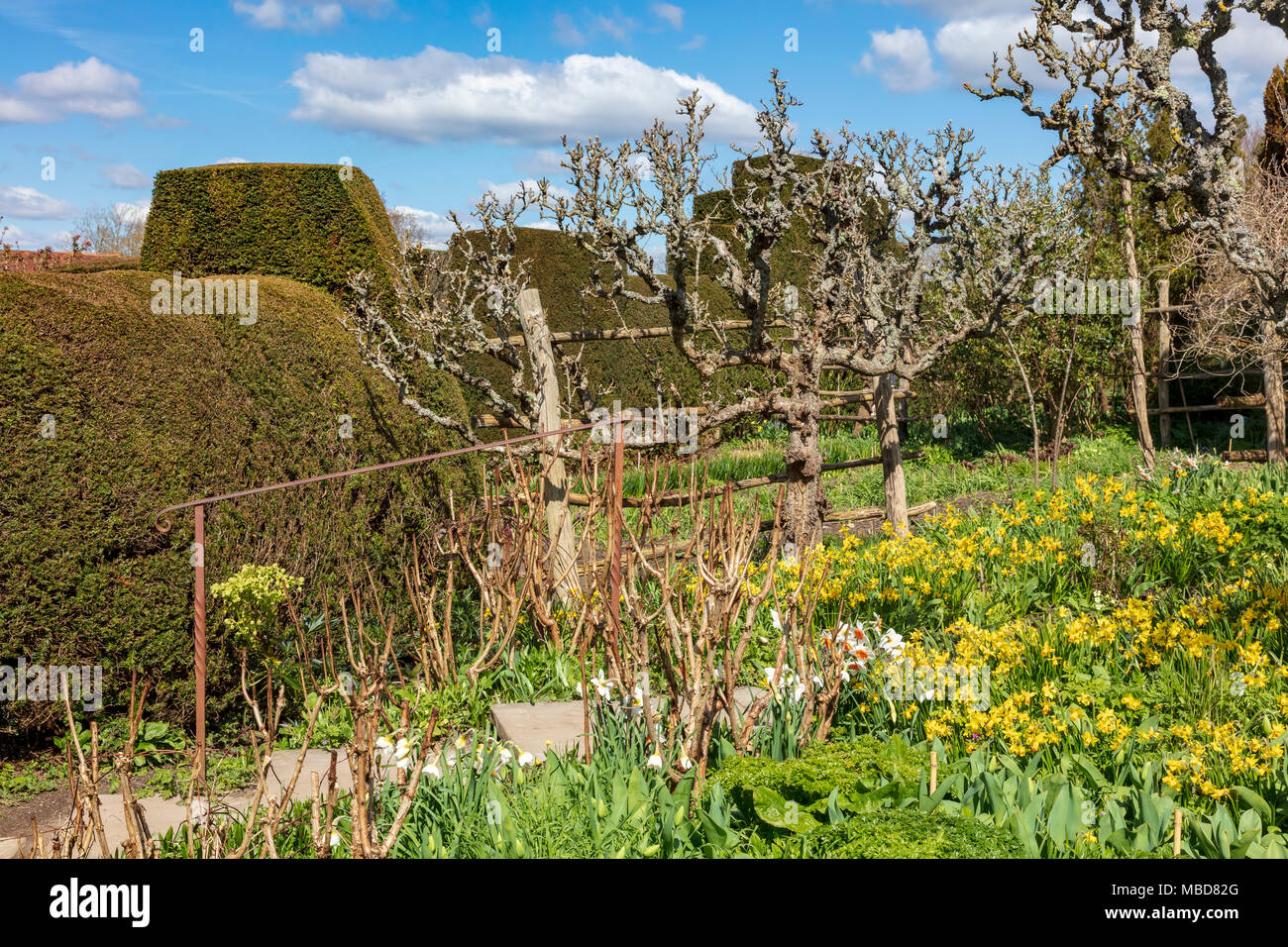 The gardens at Great Dixter in the early spring season, very few ...