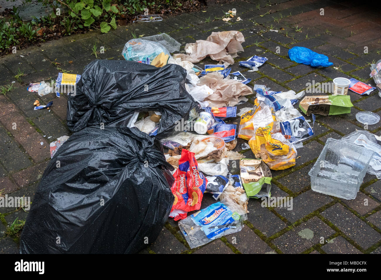 Torn bags of rubbish with the litter strewn across the front path of a house in London - Stock Image