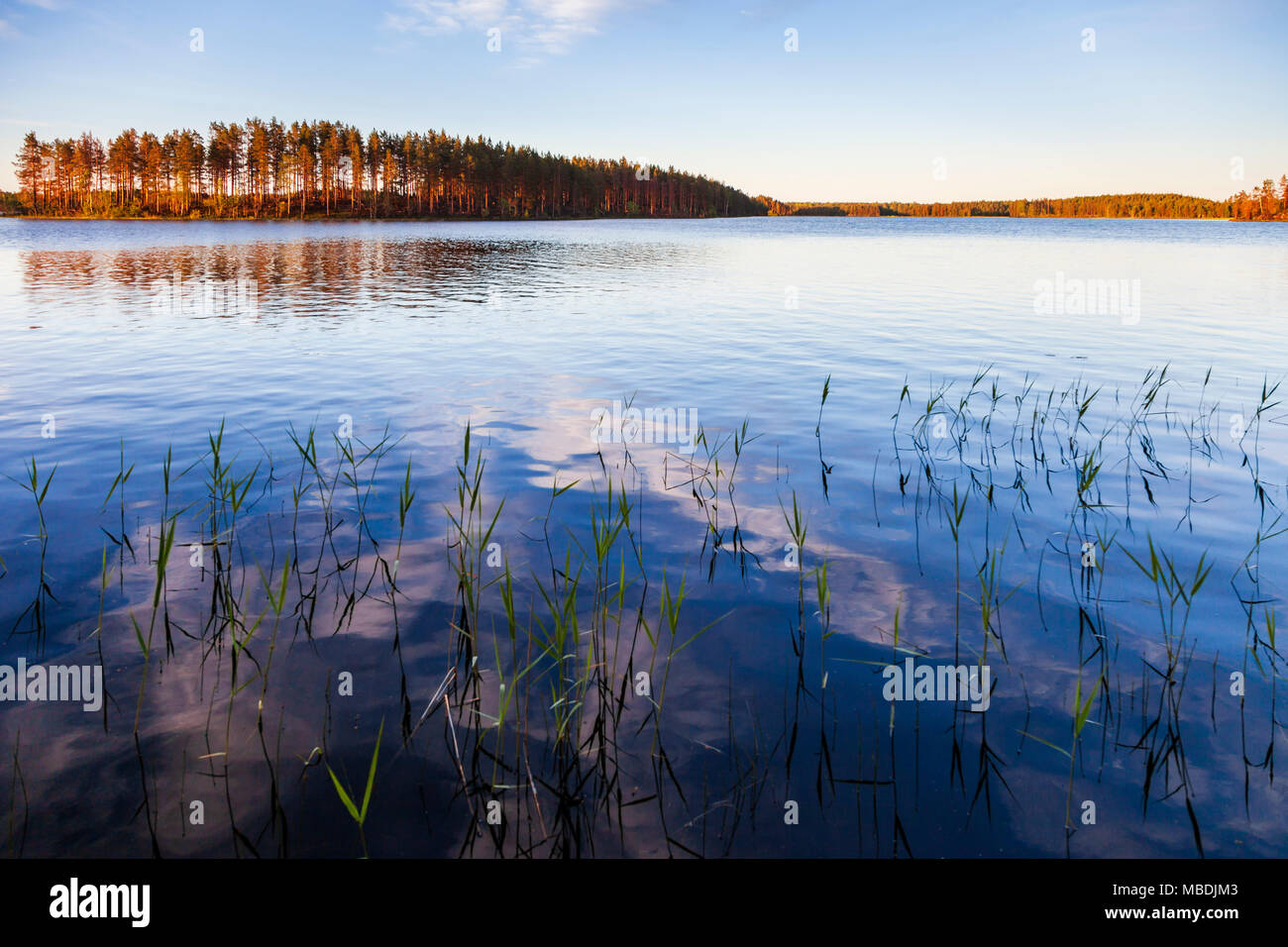 Lake, Summertime, Mid Sweden. View from Kabin private island, run by Stilleben Hotel, Ämot. - Stock Image