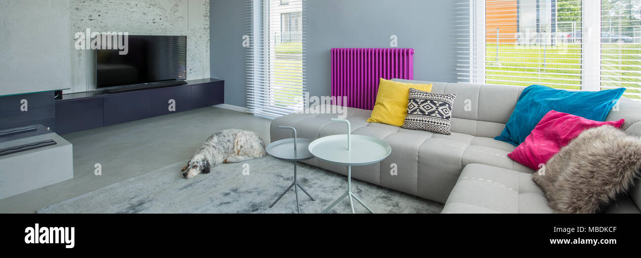 Dog and designer table near a corner sofa with colorful ...