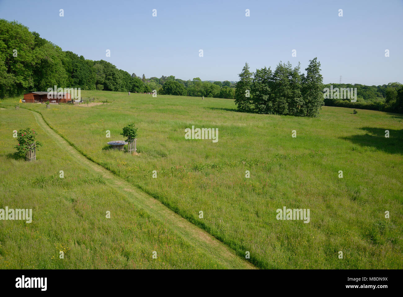 High viewpoint of a grass filed or paddock in early summer in the United Kingdom. - Stock Image