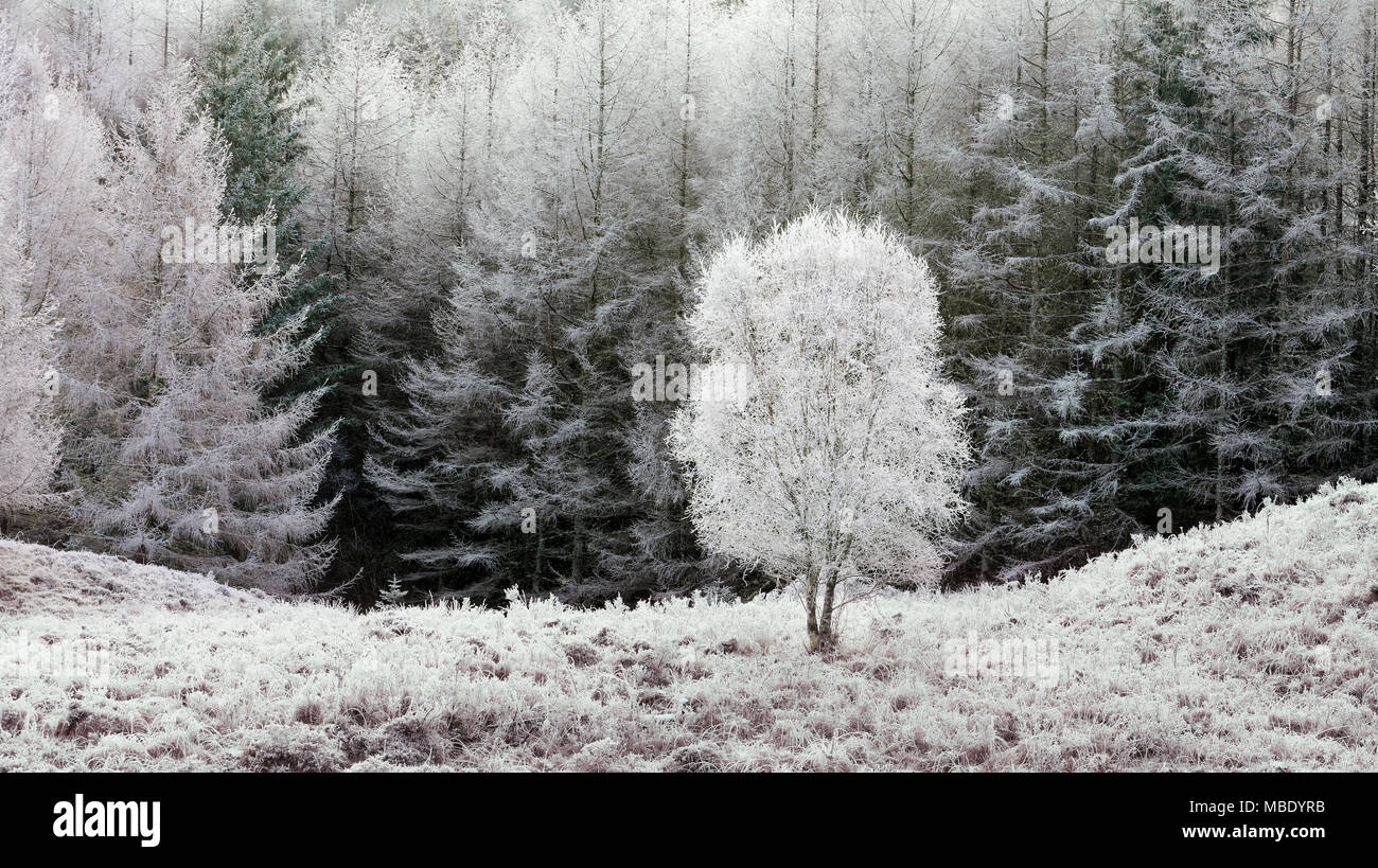 A frosty view of the remote Glen Hurich Forest in the Ardnamurchan Peninsula, Scotland. - Stock Image